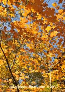 fall-folliage-tree-leaves